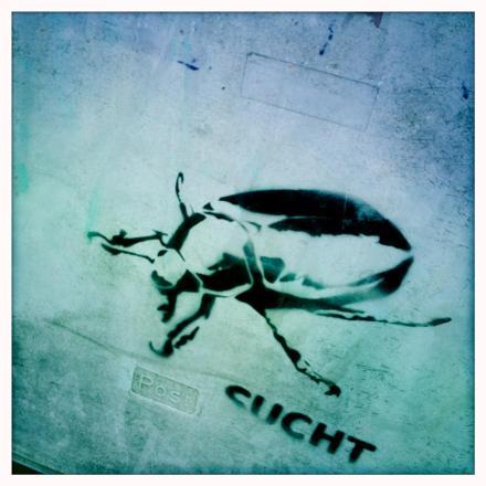 käfer sucht
